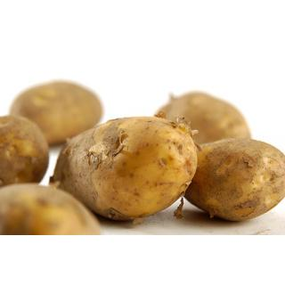 Kartoffeln, Sorte Talent - mehlig