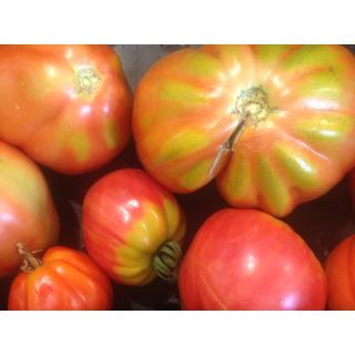 Tomaten, Ochsenh. eig.