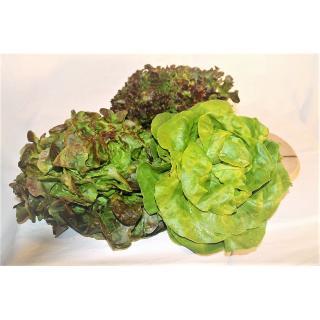 Salat, Kopf