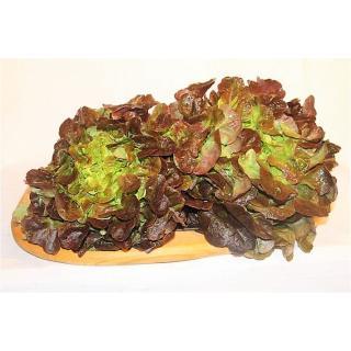 Salat, Eichblatt
